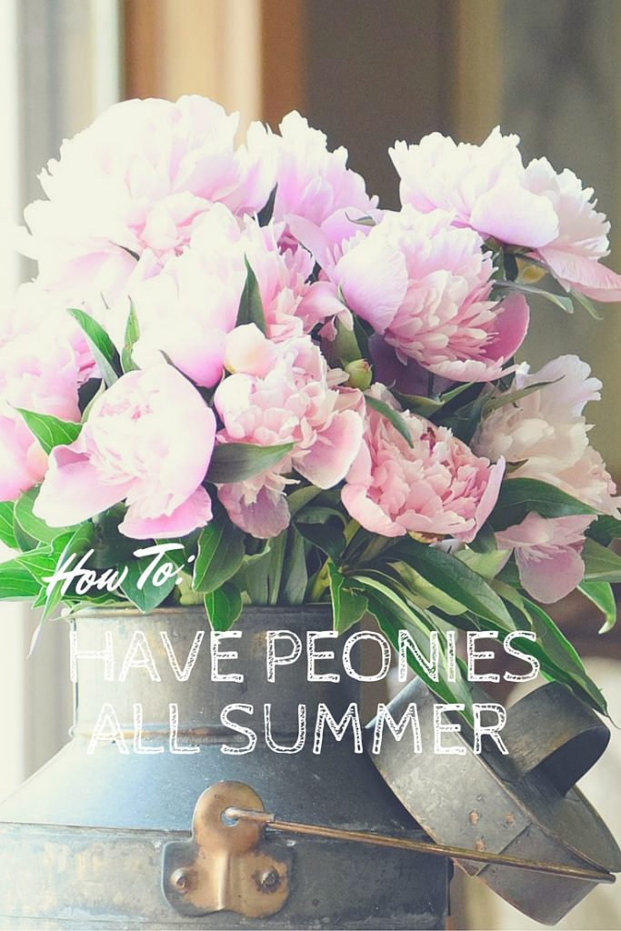 How to Have peonies all summer