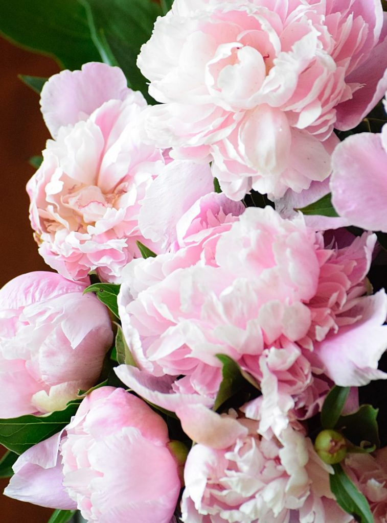 how to save peony buds to bloom later