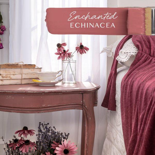 Enchanted Echinacea 2
