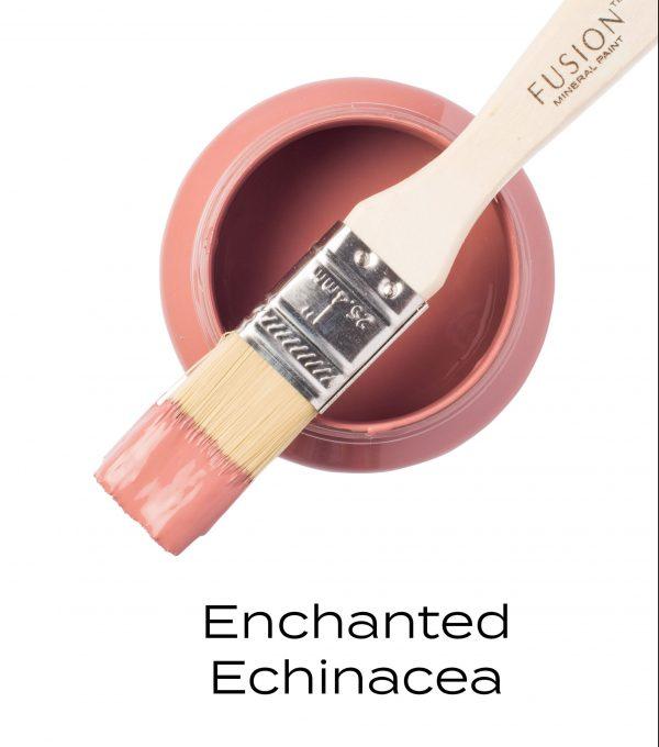 Enchanted Echinacea 1